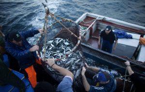 Setor das pescas com rendimentos recorde em 2016